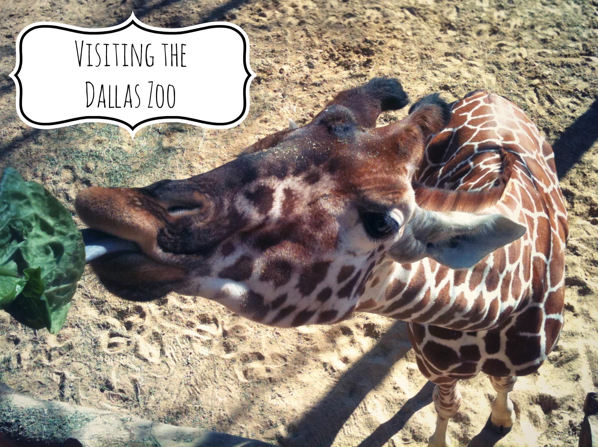 Dallas Zoo Coupons Printable Best Image Konpax 2018