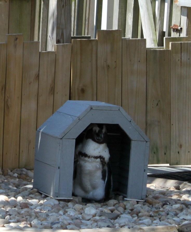 penguin in a tiny house