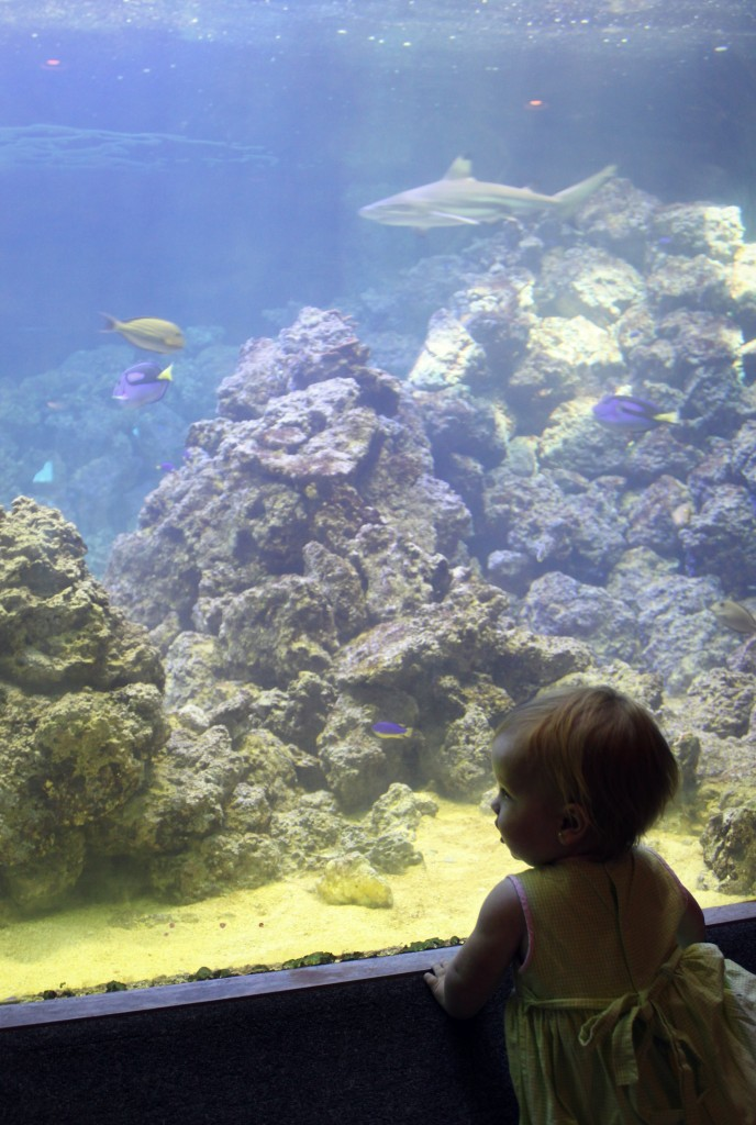 toddlers in awe of the aquarium
