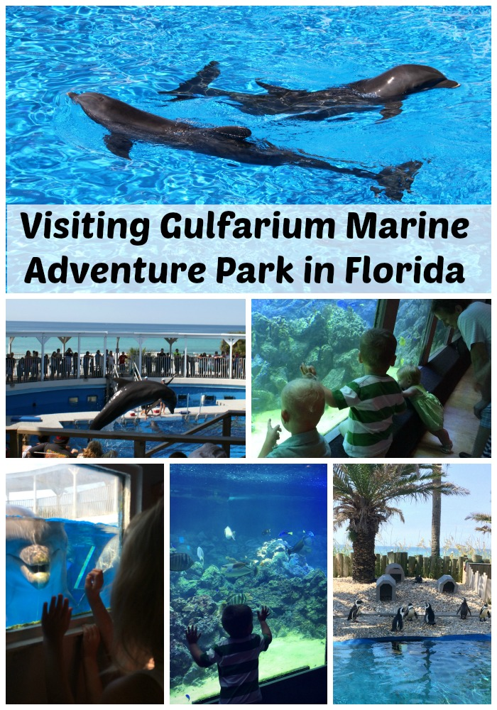 visiting gulfarium florida