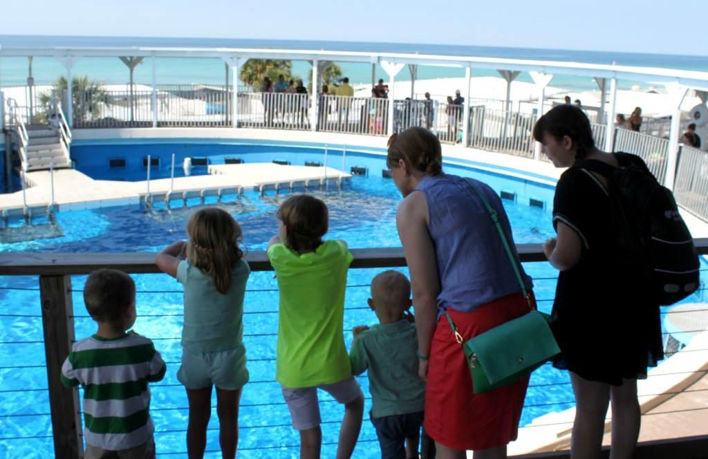 visiting the gulfarium